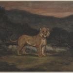 Standing Lion (Lion debout)