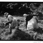 Legnava II, Ruthenia, Slovakia, Peasant Women With Scythes