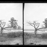 Ryders Pond (Strome Kill), Old Cedar, West Side of Pond, Brooklyn