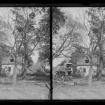 Boys on Farm Wagon, House Wrecked, near Bergen Van Wyck House (outside of Frame Lots), Flatlands, Brooklyn