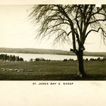 St. James Bay and Sheep, Long Island