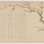 Blossoming Plum Branch