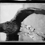 [Untitled] (Eagle)
