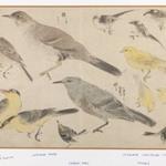 Birds in Okyo Style