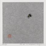 75- 52 (Beetle)