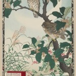 Fragrant Olive Blossoms (Osmanthus fragrans) and Horned Owl, from the series Baireis Picture Album of Birds and Flowers