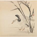 Wild Goose in Reeds