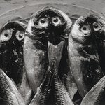 Three Fish, Yugawara, Japan 1974