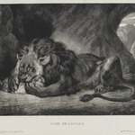 Lion de lAtlas