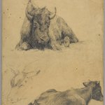 Reclining Bull and Head of Goat (recto) and Reclining Bull (verso)