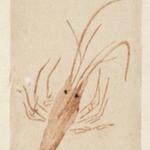 Egoyomi (Lobster)