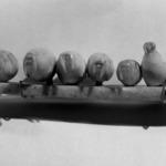 Carving of nine walruses on an ice floe