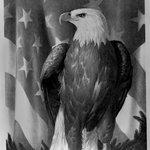 Bird of Freedom