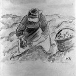 Peasant Woman Pulling Potatoes (Paysanne ramassant des pommes de terre)
