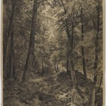Forest Scene with Rocky Brook