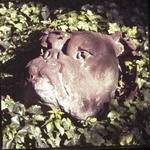 Roundel of Female Bulldog