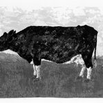 Common Barnyard Animals: The Cow
