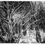 Streaming Cypress