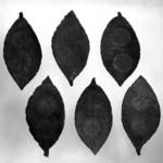 Set of Six Leaf - Shaped Side Dishes and Storage Box