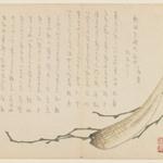 Seaweed and Daikon