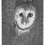 [Untitled] (Owl)