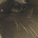 [Untitled] (Horses Eye)