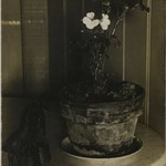 [Untitled] (Potted Plant)