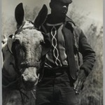 [Untitled] (Farmer and Mule, Florida)