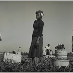 Florida Farm Workers