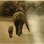 [Untitled] (Uganda)