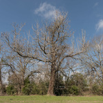 The Lynching Location of John Hartfield (1919), Ellisville, Mississippi