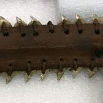Shark Teeth Sword