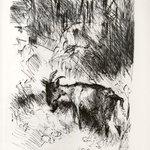 The Billy Goat (Die Ziegenbock)
