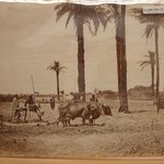Agricultural Scene; Men with Gamoussa, Egypt