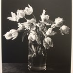 Untitled (Parrot tulips in glass vase)