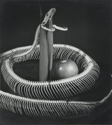 Pierre Jahan (French, 1909-2003). <em>Snake Skeleton with Apple</em>, early 1950s. Vintage gelatin silver photograph, 9 1/2 x 8 3/8 in. (24.1 x 21.3 cm). Brooklyn Museum, Gift of Eileen and Adam Boxer, 1989.190.1. © artist or artist's estate (Photo: Brooklyn Museum, 1989.190.1_PS2.jpg)