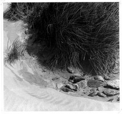 Paul Strand (American, 1890-1976). <em>Beach Grass, Outer Hebrides</em>, 1954. Gelatin silver photograph, sheet: 10 7/8 x 11 1/2 in. Brooklyn Museum, Gift of Drs. Naomi and Walter Rosenblum, 1991.220.3. © artist or artist's estate (Photo: Brooklyn Museum, 1991.220.3_bw.jpg)