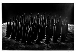 John Gruen (American, born 1935). <em>Figurines, No. 1</em>, 1990-1991. Gelatin silver photograph, image (sight): 14 1/4 x 21 7/8 in. (36.2 x 55.6 cm). Brooklyn Museum, Purchased with funds given by the Horace W. Goldsmith Foundation, Ardian Gill and the Coler Foundation, 1995.161. © artist or artist's estate (Photo: Brooklyn Museum, 1995.161_bw.jpg)