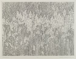 Richard Claude Ziemann (American, born 1932). <em>Wetland Grasses</em>, 1980. Stiple engraving, 9 x 12 in. (22.9 x 30.5cm). Brooklyn Museum, Bequest of Mrs. Carl L. Selden, 1996.157.21. © artist or artist's estate (Photo: Brooklyn Museum, 1996.157.21_PS4.jpg)