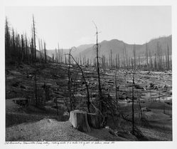 Frank Gohlke (American, born 1942). <em>Old Clear Cut in Clearwater Creek</em>, 1981. Gelatin silver photograph, image: 13 x 15 3/4 in. (33 x 40 cm). Brooklyn Museum, Gift of Robert L. Smith and Patricia L. Sawyer, 1999.127.1. © artist or artist's estate (Photo: Brooklyn Museum, 1999.127.1_bw.jpg)