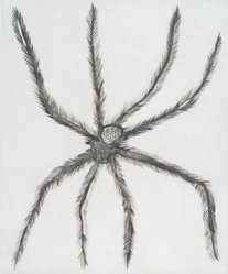 Louise Bourgeois (French-American, 1911-2010). <em>Hairy Spider</em>, 2001. Drypoint, Sheet: 19 x 16 in. (48.3 x 40.6 cm). Brooklyn Museum, Robert A. Levinson Fund, 2003.14. © artist or artist's estate (Photo: Brooklyn Museum, 2003.14.jpg)
