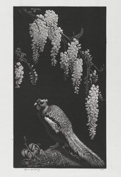 Lionel Arthur Lindsay (Australian, 1874-1961). <em>Pheasant and Wistaria</em>, 1934. Wood engraving on paper, sheet: 11 x 7 1/8 in. (27.9 x 18.1 cm). Brooklyn Museum, Gift of the members of the Woodcut Society, 35.841. © artist or artist's estate (Photo: Brooklyn Museum, 35.841_PS2.jpg)