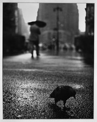 Paul Weller (American, 1912-2000). <em>Pigeon in the Rain on Herald Square</em>, early to mid-20th century. Chlorobromide print Brooklyn Museum, Gift of the artist, 50.49.3. © artist or artist's estate (Photo: Brooklyn Museum, 50.49.3_acetate_bw.jpg)