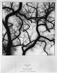 Joseph Breitenbach (American, 1896-1984). <em>Straight Shot</em>, 1948. Gelatin silver photograph, 11 x 11 in. (27.9 x 27.9 cm). Brooklyn Museum, Gift of the artist, 52.101.1. © artist or artist's estate (Photo: Brooklyn Museum, 52.101.1_acetate_bw.jpg)