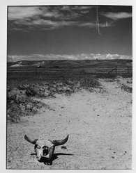 Arthur Rothstein (American, 1915-1985). <em>Overgrazed Land, Pennington Co., South Dakota</em>, May, 1936. Gelatin silver photograph, 13 7/8 x 10 7/16 in. (35.2 x 26.5 cm). Brooklyn Museum, Gift of the artist, 53.24.2e. © artist or artist's estate (Photo: Brooklyn Museum, 53.24.2e_acetate_bw.jpg)