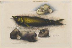 Luigi Rist (American, 1888-1959). <em>Fish and Mushrooms</em>, 1954. Woodcut on paper, 9 1/2 x 13 1/4 in. (24.1 x 33.7 cm). Brooklyn Museum, Dick S. Ramsay Fund, 54.107.3. © artist or artist's estate (Photo: Brooklyn Museum, 54.107.3_PS6.jpg)