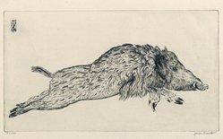 Joseph Hecht (Polish, 1891-1951). <em>Wild Boar (Le Sanglier)</em>. Engraving on laid paper, 7 1/8 x 13 in. (18.1 x 33 cm). Brooklyn Museum, Charles Stewart Smith Memorial Fund, 56.171.2. © artist or artist's estate (Photo: Brooklyn Museum, 56.171.2_PS6.jpg)
