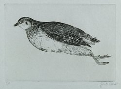 Joseph Hecht (Polish, 1891-1951). <em>Dead Partridge (La Perdrix)</em>. Engraving on laid paper, 5 7/16 x 7 11/16 in. (13.8 x 19.5 cm). Brooklyn Museum, Charles Stewart Smith Memorial Fund, 56.171.3. © artist or artist's estate (Photo: Brooklyn Museum, 56.171.3_PS6.jpg)