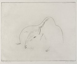 Joseph Hecht (Polish, 1891-1951). <em>Bison Resting</em>. Engraving on laid paper, 9 1/4 x 11 11/16 in. (23.5 x 29.7 cm). Brooklyn Museum, Charles Stewart Smith Memorial Fund, 56.171.4. © artist or artist's estate (Photo: Brooklyn Museum, 56.171.4_PS9.jpg)