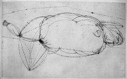 Joseph Glasco (American, 1925-1996). <em>Reclining Nude</em>, 1950. Pen and ink on paper, 22 x 34 in. (55.9 x 86.4 cm). Brooklyn Museum, Dick S. Ramsay Fund, 56.83. © artist or artist's estate (Photo: Brooklyn Museum, 56.83_acetate_bw.jpg)